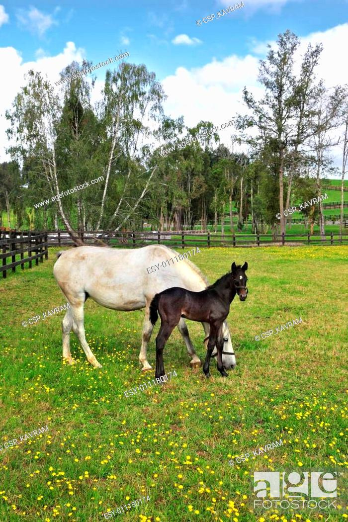Stock Photo: Beautiful horse with a charming colt.