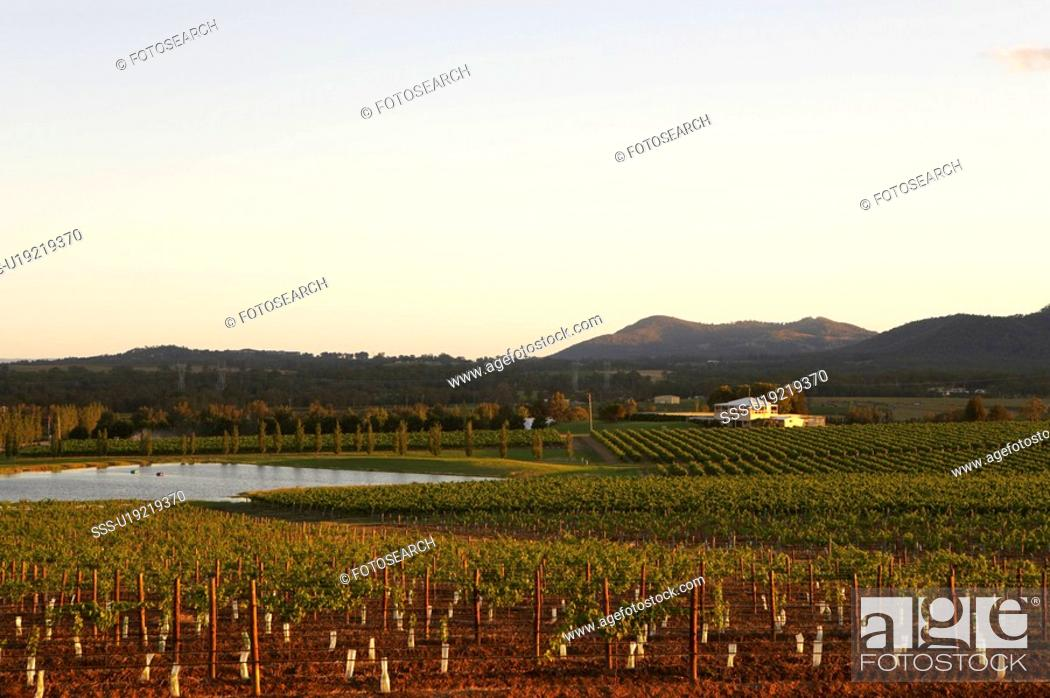Stock Photo: Vineyard in Hunter Valley, Australia.