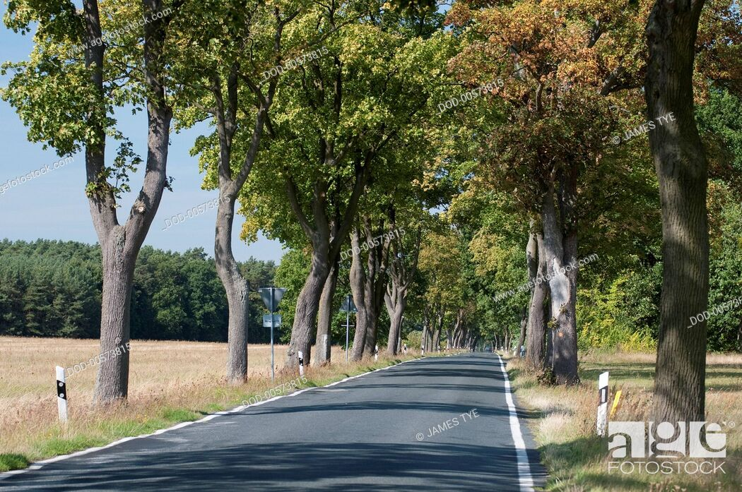 Imagen: Germany, Brandenburg, Rheinsberg, straight narrow tree lined road through countryside.