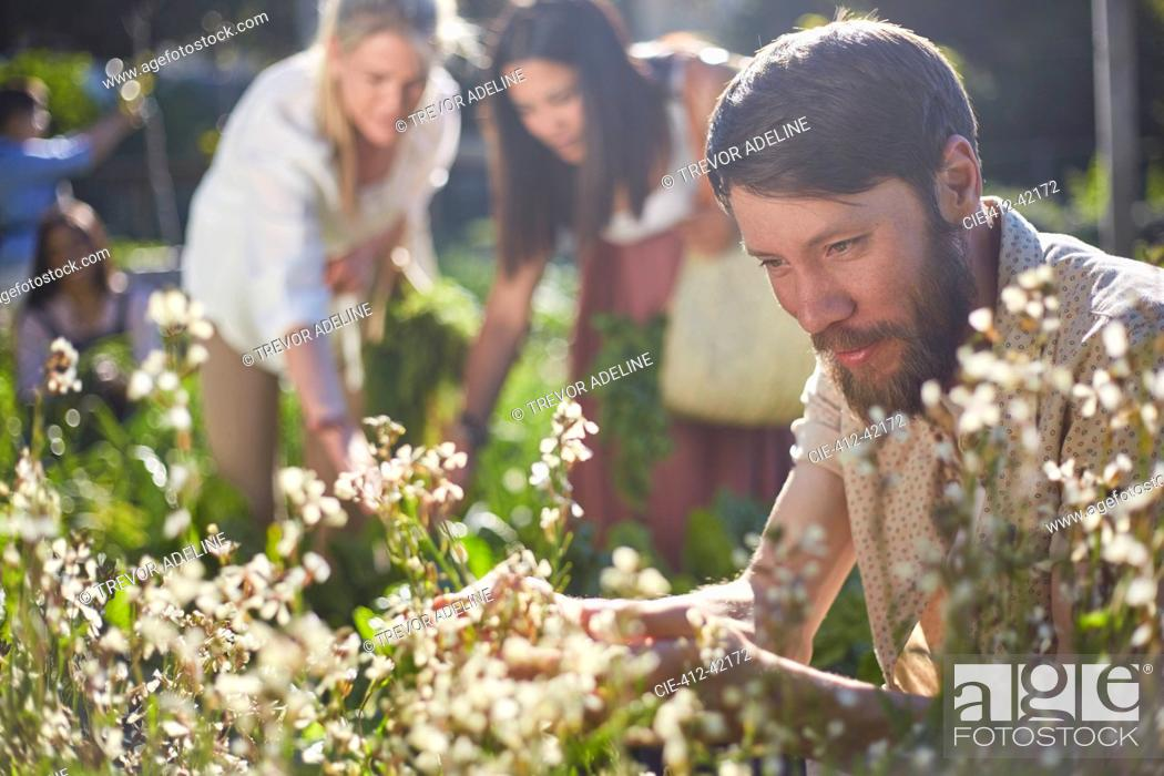 Stock Photo: Man looking at flowers in sunny garden.