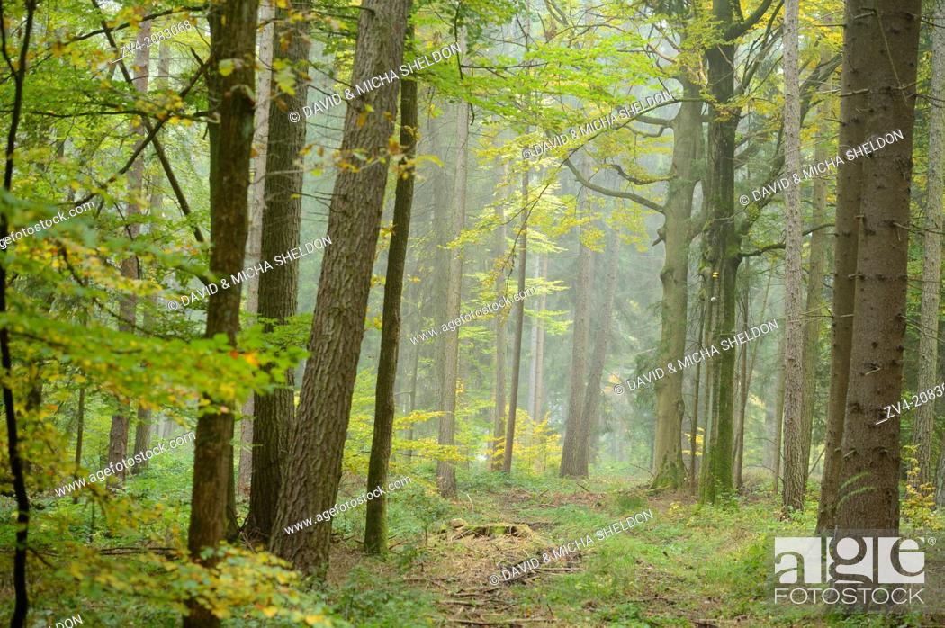 Stock Photo: Landscape of a little trail going through the forest in autumn, Upper Palatinate, Bavaria, Germany.