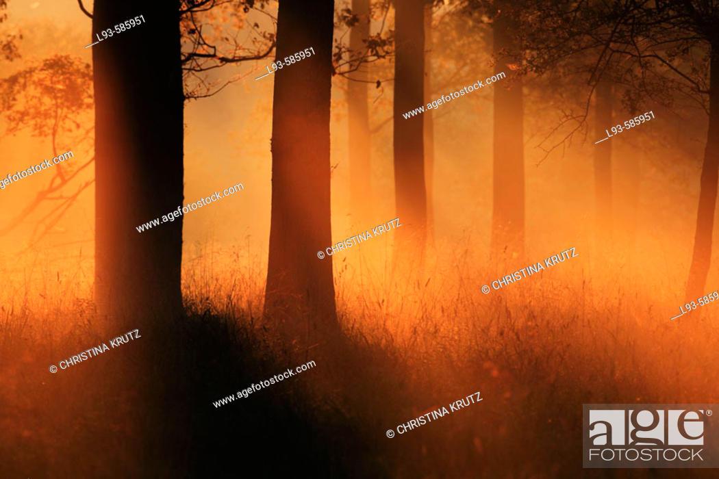 Stock Photo: Misty morning, trees in fog.