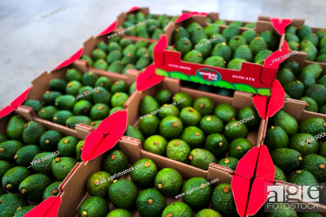 Stock Photo: Boxes of avocados are seen aligned on the pallet at a processing plant in Sonsón, Antioquia department, Colombia, 22 October 2019.