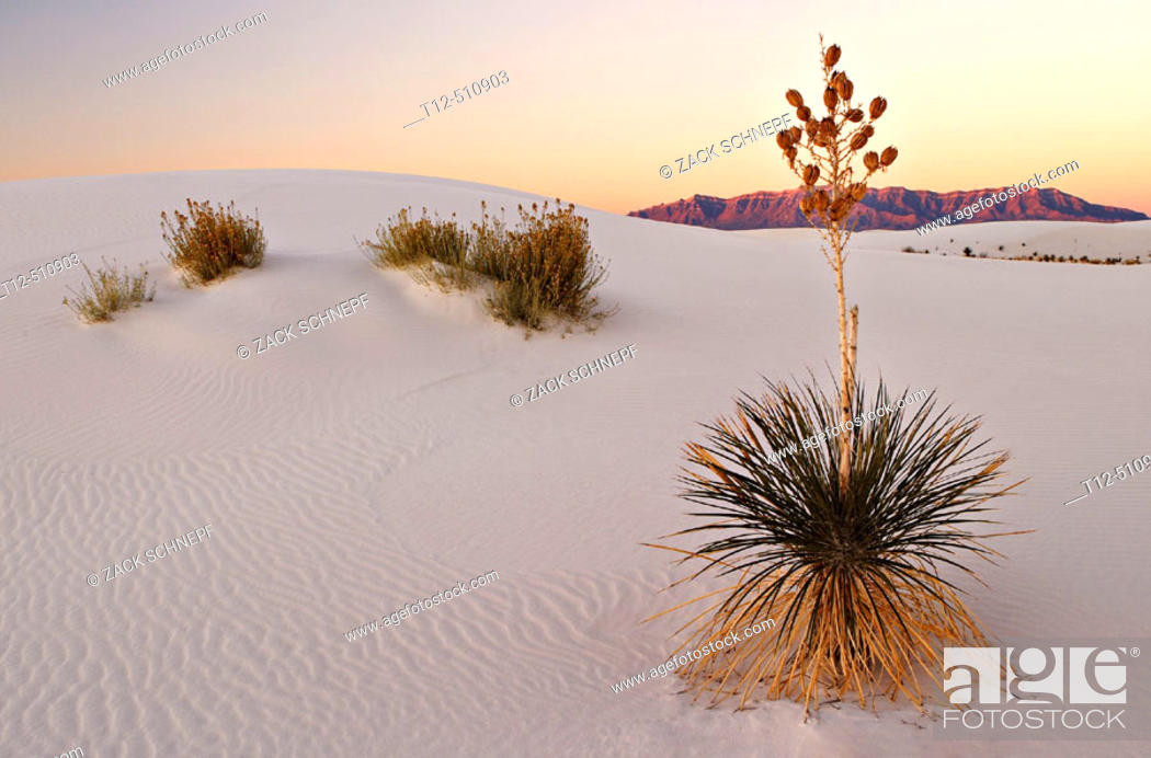 Stock Photo: Sunrise in White Sands New Mexico.