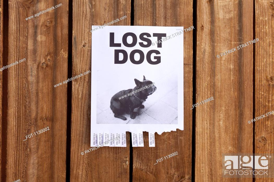 Stock Photo: A lost dog flyer posted on a wooden fence.