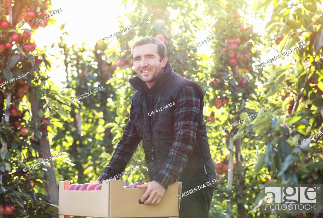 Stock Photo: Portrait smiling male farmer harvesting apples in food processing plant.
