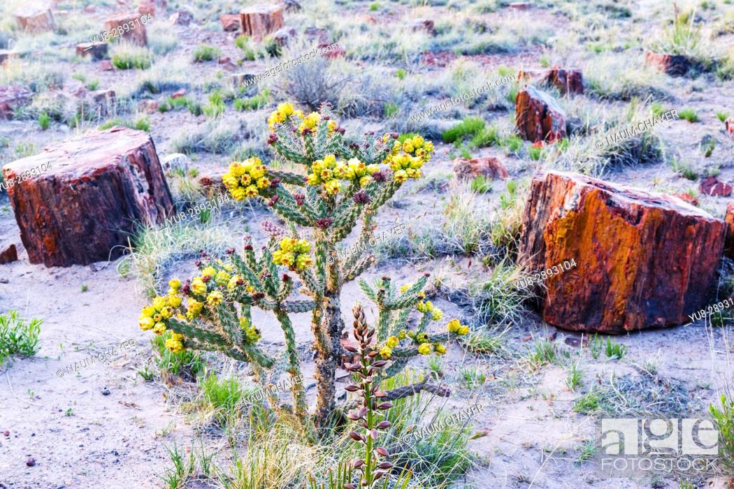 Stock Photo: Beautiful Petrified Forest National Park sketch, Arizona, USA.