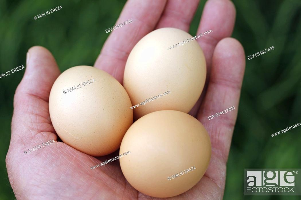Stock Photo: Hand with eggs.
