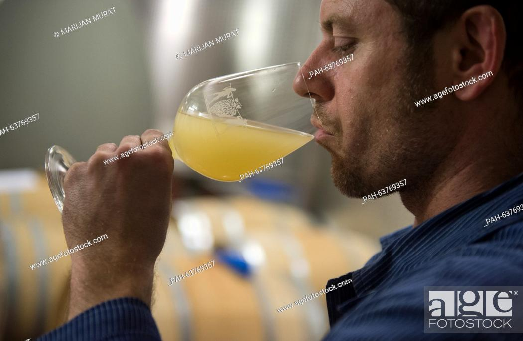Stock Photo: Vineyard technician Stefan Sigloch tastes a sample in the wooden and barrique barrel cellar of the Lauffener Weingaertner eG wine growing company.