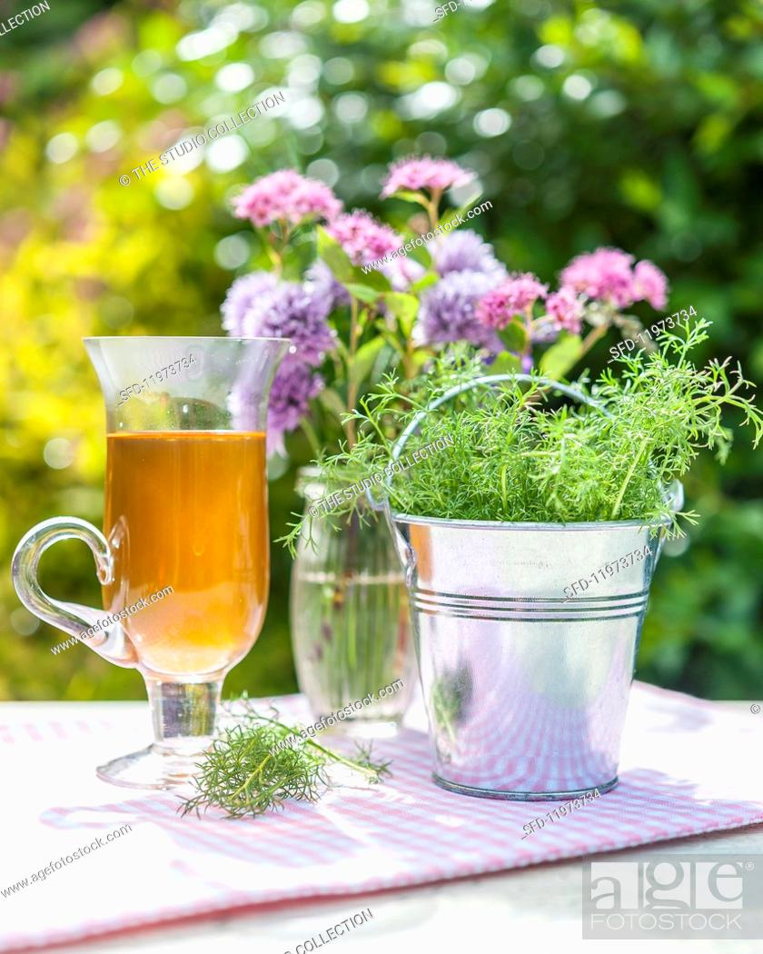 Stock Photo: Chamomile in a tin bucket, tea and flowers on a garden table.