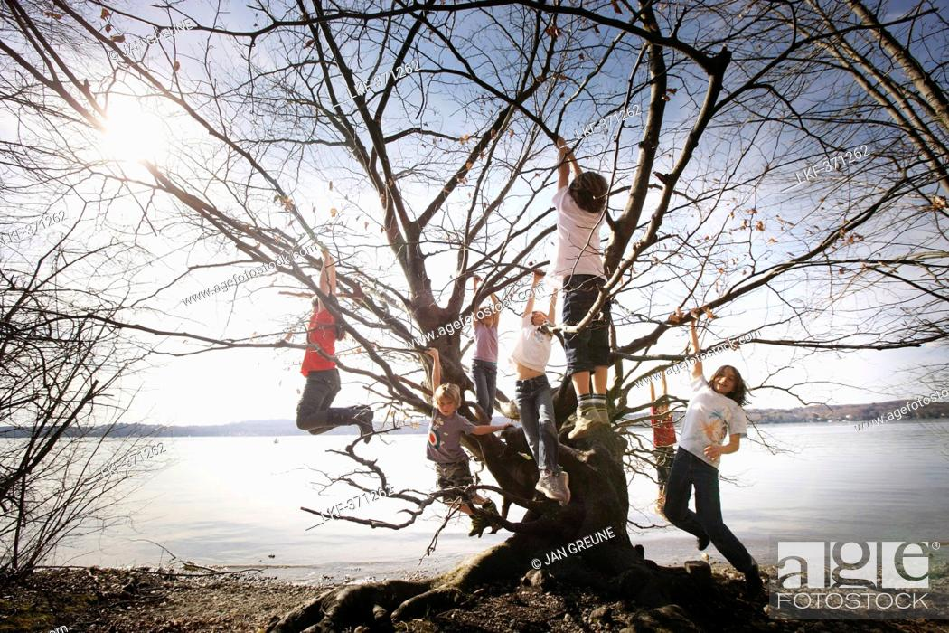 Stock Photo: Children playing along the lakeshore, climbing a tree, Leoni castle grounds, Leoni, Berg, Lake Starnberg, Bavaria, Germany.