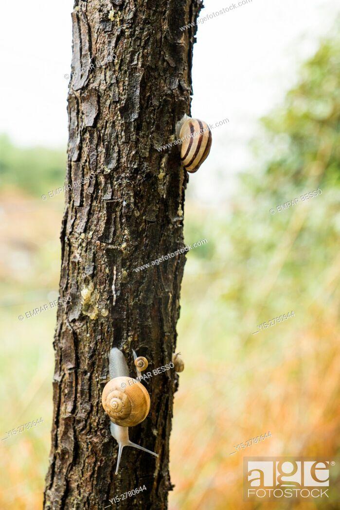 Stock Photo: Snails.