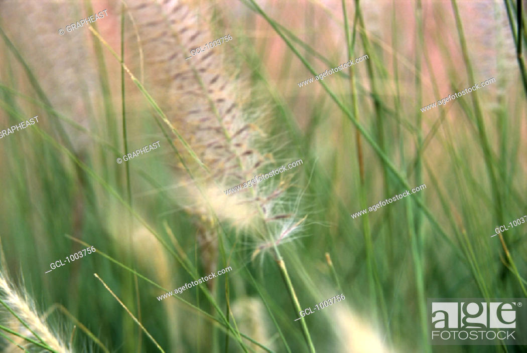 Stock Photo: Blade of grass in the meadow.