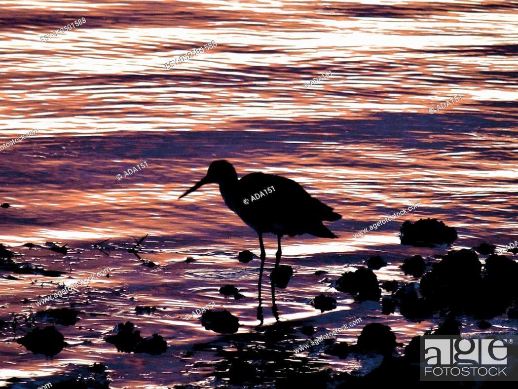 Stock Photo: Birds under the sunset.
