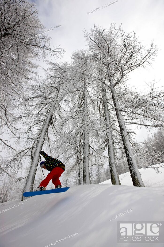 Stock Photo: A snowboarder flying through a snowy forest.