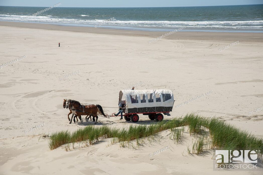 Stock Photo: horse cart on beach at Terschelling, Holland.