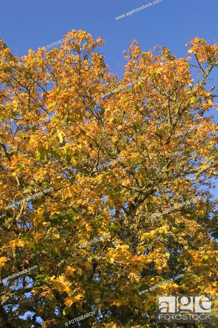 Stock Photo: Blue, Day, Clear Sky, Branch, Autumn.