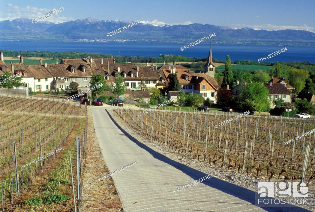 Stock Photo: vineyard, Switzerland, La Cote, Vaud, Fechy, Lake Geneva, Alps, Europe, Vineyard road leads down to the village of Fechy covered with vineyards in the spring.