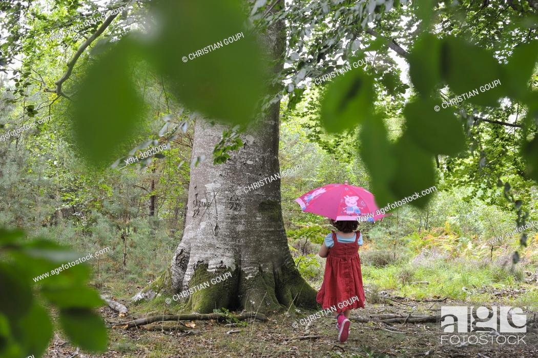 Stock Photo: little girl beside a remarkable common beech tree in the Forest of Rambouillet, Haute Vallee de Chevreuse Regional Natural Park, Department of Yvelines.