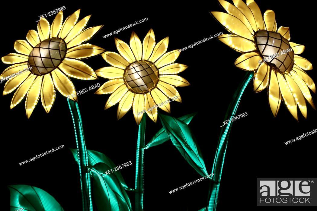 Stock Photo: Decorative sunflowers, Chinese silk lantern.