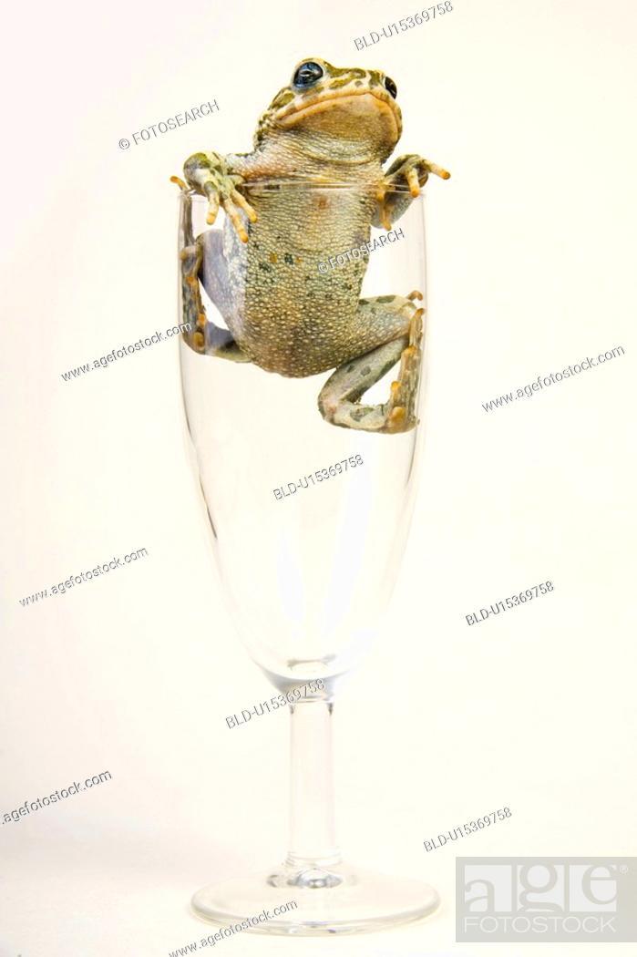 Stock Photo: animals, close, champagne glass, catch, alfred.