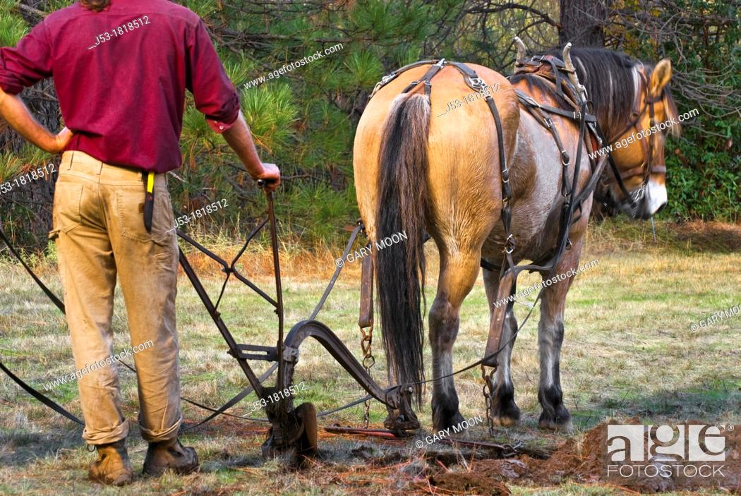 Photo de stock: Using draft horse to plow pasture into cropland, Burton Ranch, Nevada City, California.