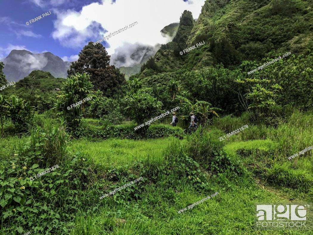 Stock Photo: Rainforest and steep mountains, Iao Valley State Park, Maui, Hawaii.