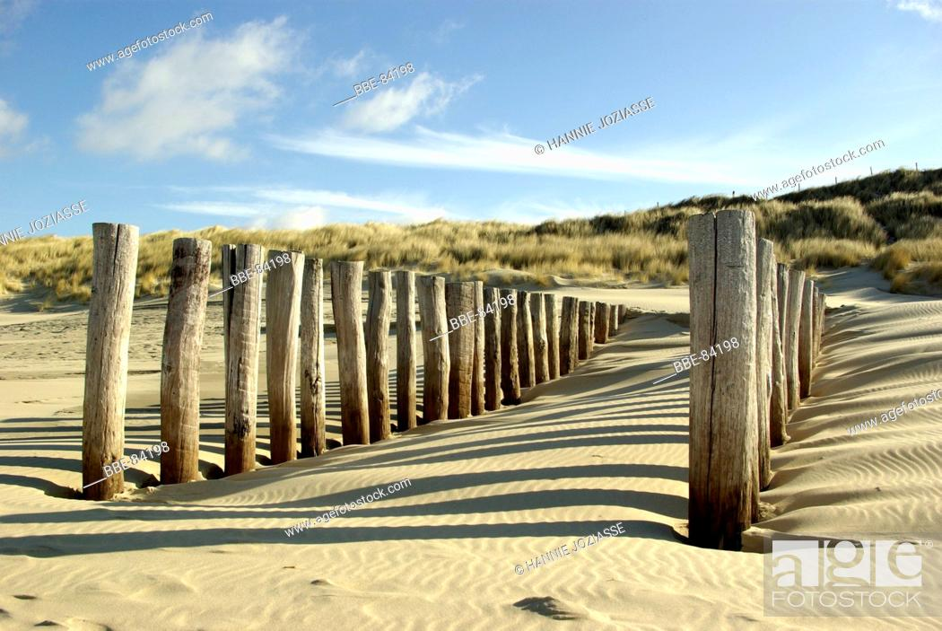 Imagen: Wooden poles at the beach protect the beach.