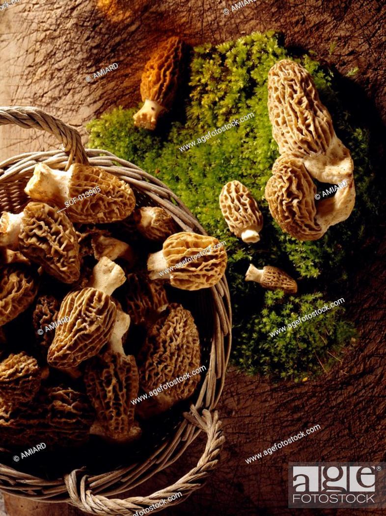 Stock Photo: morel mushrooms.