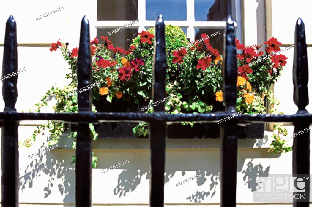 Stock Photo: Window box and railings.