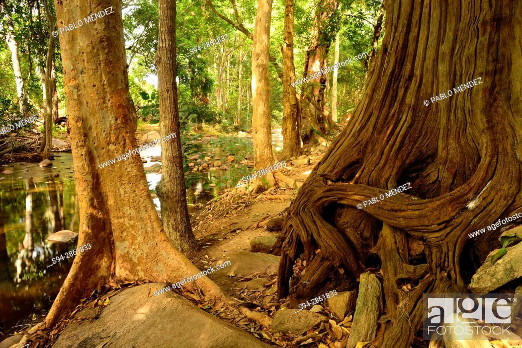 Pambar river landscape in Chinnar wildlife sanctuary, Idukki