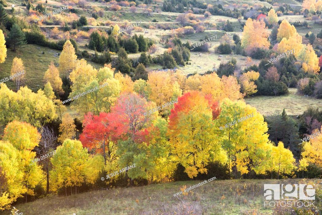 Imagen: Ripeta Valley.