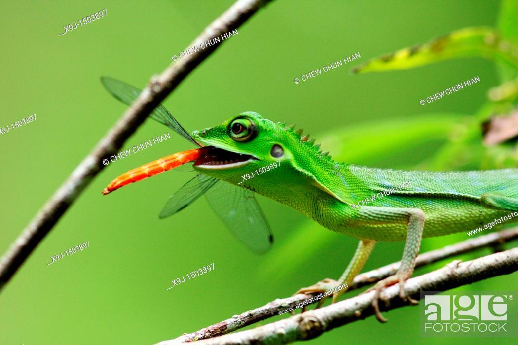 Stock Photo: Chameleon.