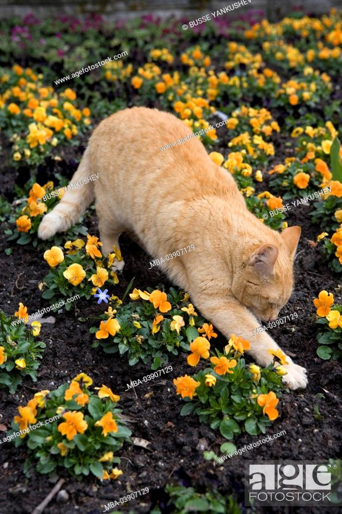 Stock Photo Dig Cat Flower Bed