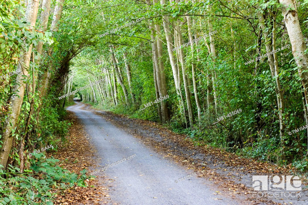 Stock Photo: Lochside Trail at Dooley Road. Saanich, British Columbia, 7 September 2005.