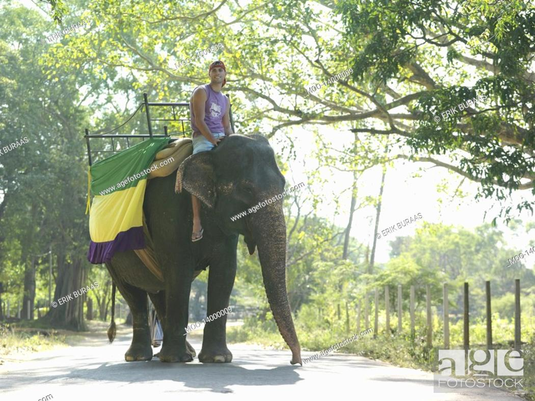 Stock Photo: Young man riding elephant on road in trees.