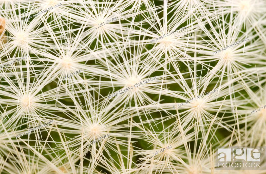 Stock Photo: Prickles Cactus.