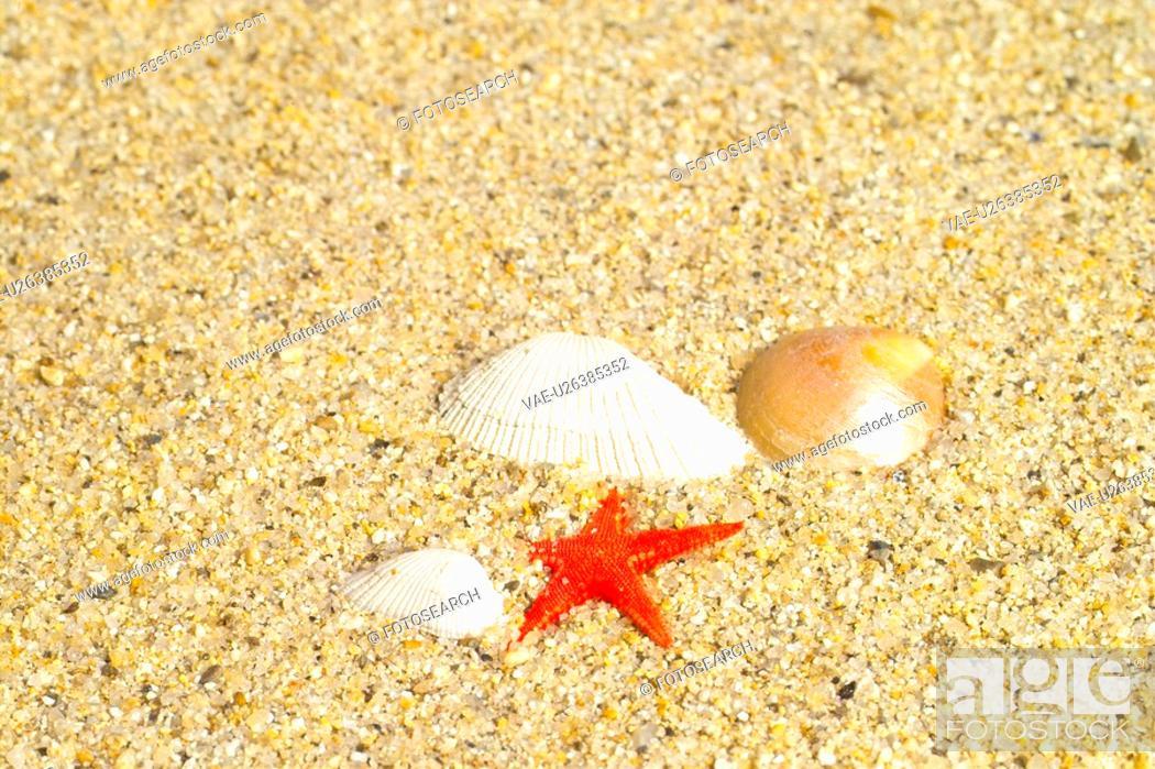 Stock Photo: mollucca, animal, mollusc, mollusks, mollusk, shell.