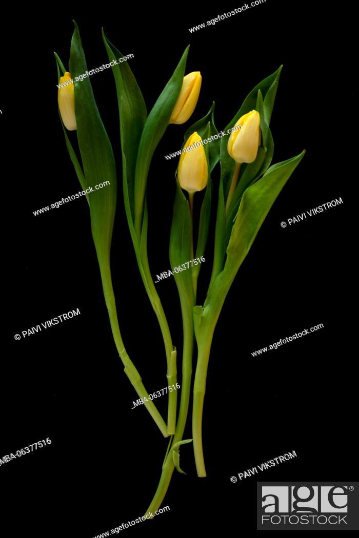 Stock Photo: bloom, bunch, celebration, closeup, decoration, easter, flora, floral, flower, fresh, gift, green, leaf, natural, nature, petal, plant, pretty, romance, season.