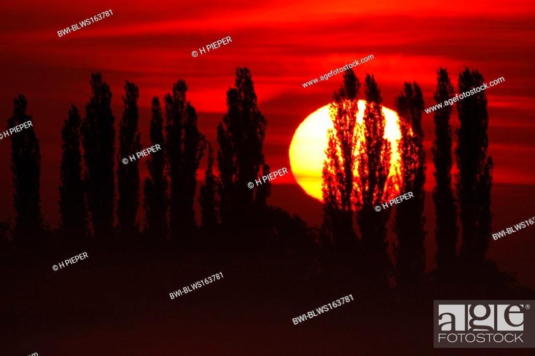 Stock Photo: sunrise, Muensterland, Germany, North Rhine-Westphalia.
