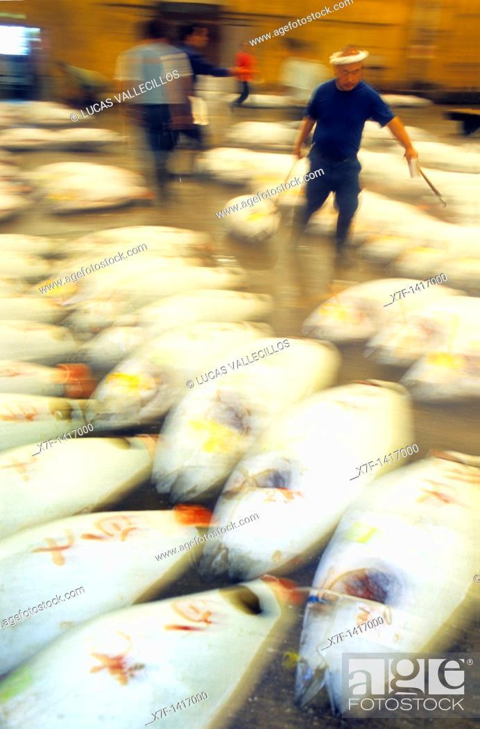 Stock Photo: Frozen tunas in Tsukuji, biggest fishmarket in the world Tokyo city, Japan, Asia.