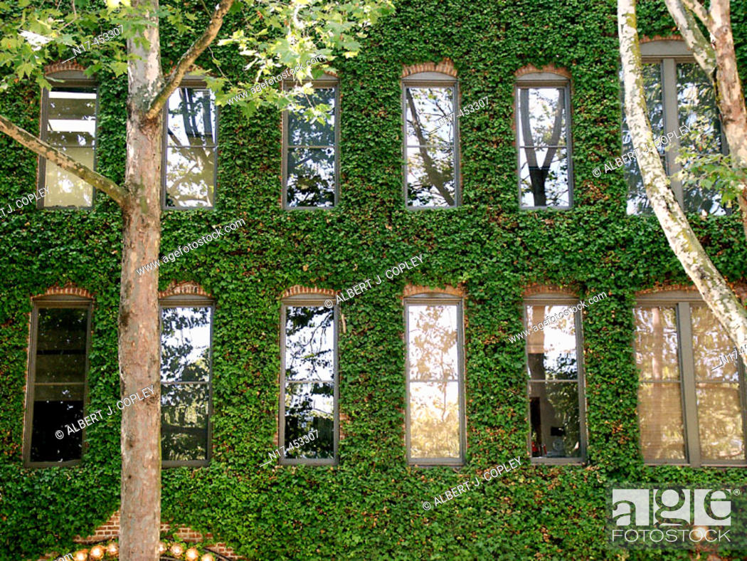 Stock Photo: building, ivy covered.