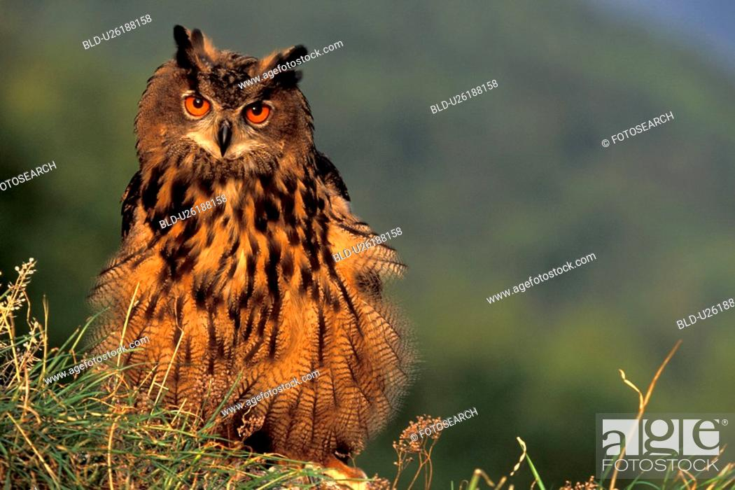 Stock Photo: federn, abenddaemmerung, animals, aves, beak.