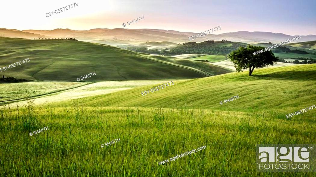 Stock Photo: Foggy meadows in the morning, Tuscany.