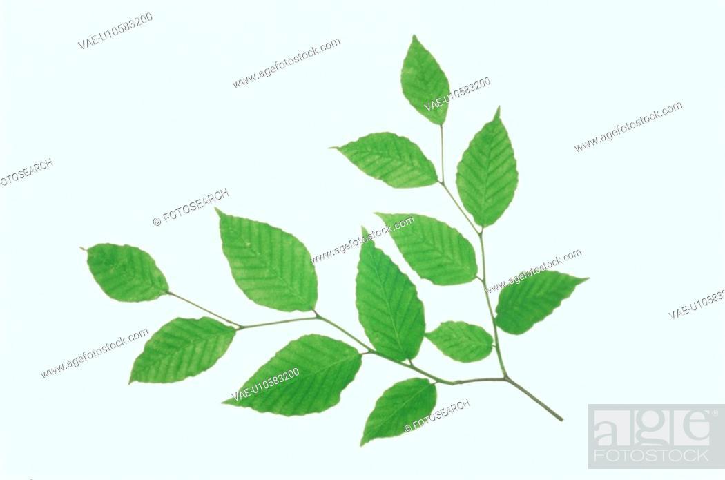 Stock Photo: Leaf.