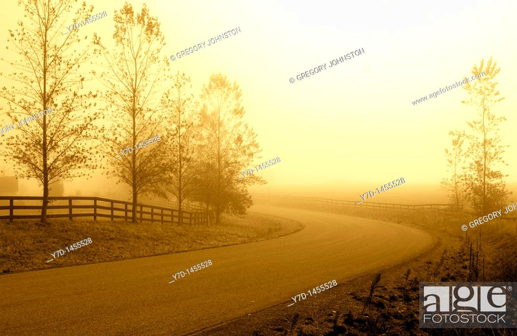 Stock Photo: A secluded country road in the morning haze casts a yellowish hue.