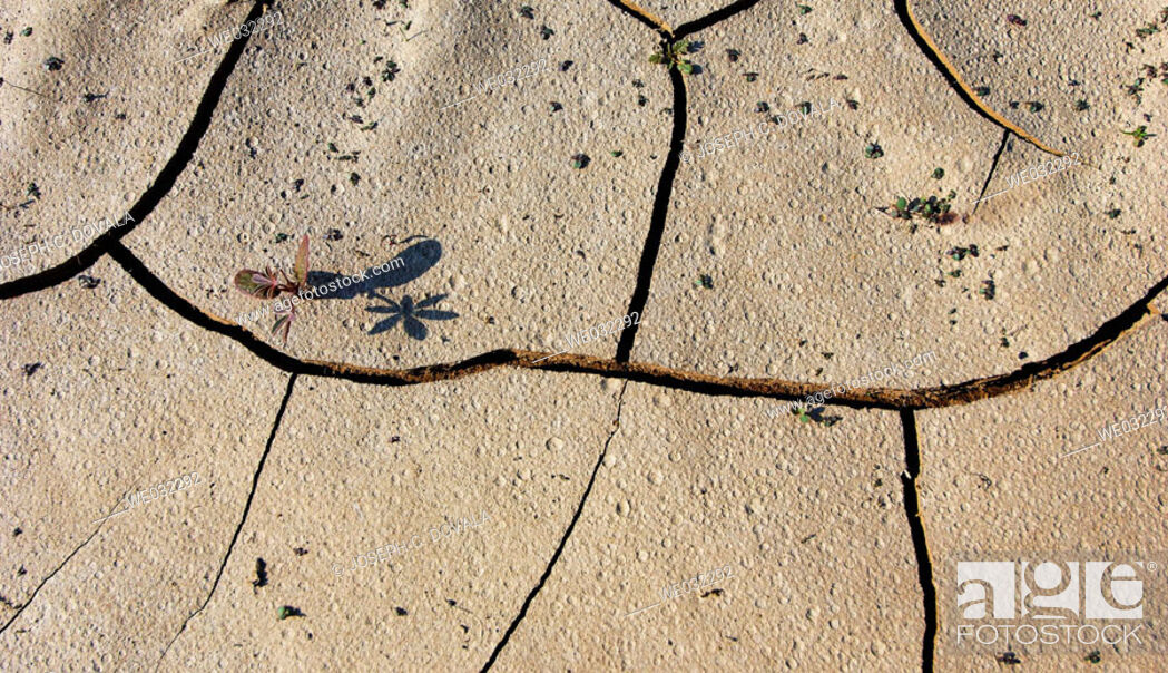 Stock Photo: Cracked mud with small plants beginning to grow. Oxnard, California, USA.