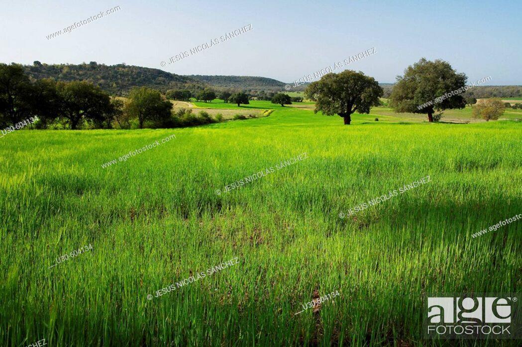 Imagen: Valdelosa, Salamanca, Castilla y León. Spain.