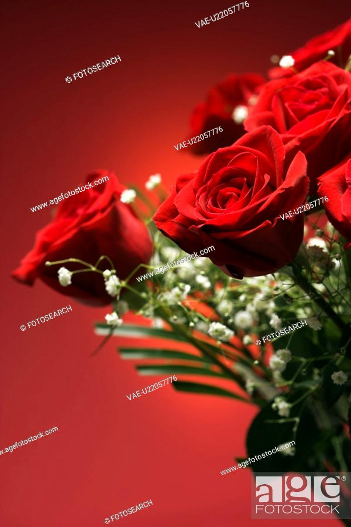 Stock Photo: Close-up of bouquet of red roses with baby's breath against red background.