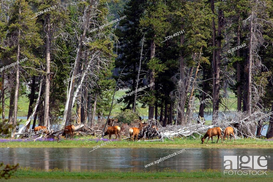 Stock Photo: Am Yellowstone River grasend.